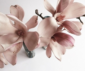 flowers, pink, and aesthetic image