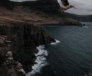 nature, sea, and bird image