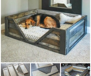 diy, dog, and recycle image