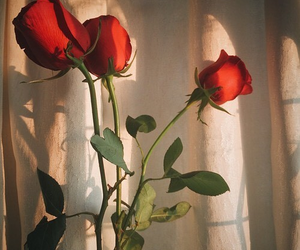 rose, flower, and heart image
