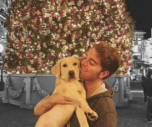 dogs, lights, and shane image