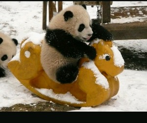 panda, winter, and tiere image