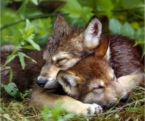 wolf, animal, and puppy image