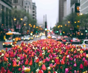 city, colours, and flowers image