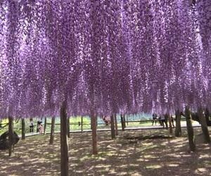 flower, purple, and 花 image