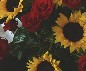 amarillo, amor, and girasol image