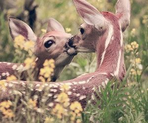 fawns image