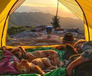 dog, camping, and travel image