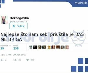 balkan, tweet, and twitter image