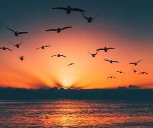 beautiful, bird, and sunset image