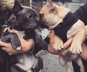 animals, dog, and doggy image