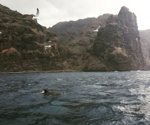 birds, tenerife, and dolphins image