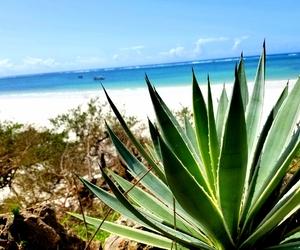 beach, summer, and mombasa image