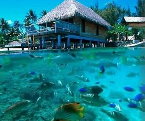 summer, fish, and beach image