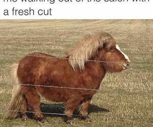 animals, hair, and hilarious image