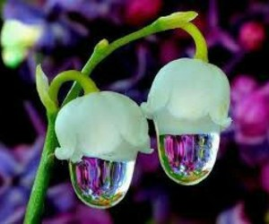 flowers, nature, and drop image