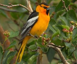 bird, nature, and yellow image