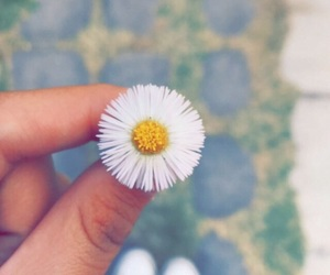 baby, earth, and flower image
