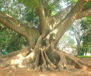 doğa image