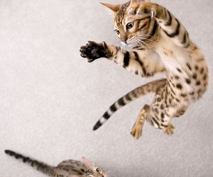 cat, animal, and jump image