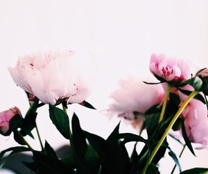 flower, gossip girl, and inspiration image