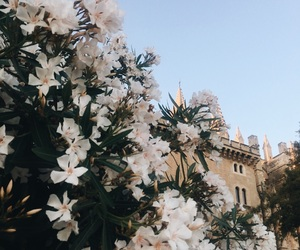 flowers, mallorca, and spain image