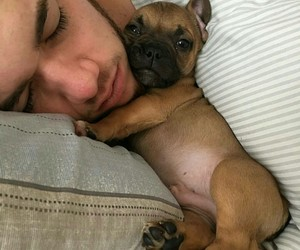 animals, sweet, and little puppy image