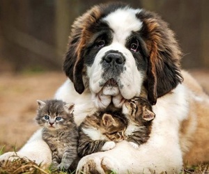 adorable, Awe, and animals image