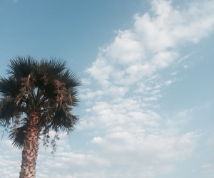 cloud, summer, and palm image