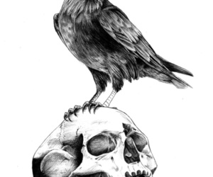 black and white, skull, and raven image