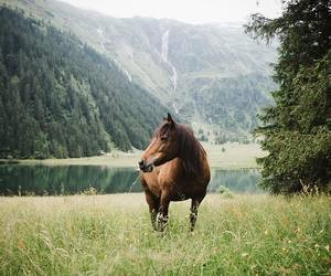 nature, animal, and horse image