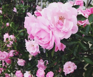 beautiful, cliche, and pink image