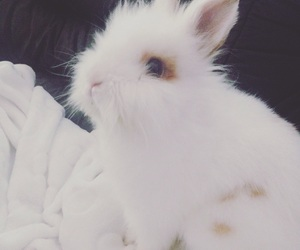 lovely, pet, and rabbit image