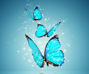 butterfly, blue, and water image