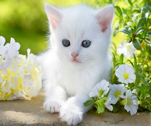 cat, white, and sweet image