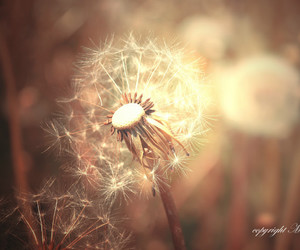 bokeh, light, and nature image