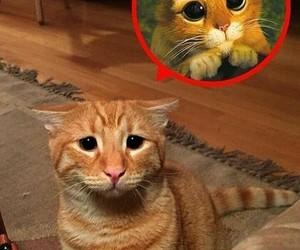 cat and sad image
