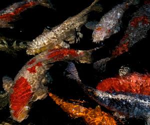 fish, aesthetic, and dark image