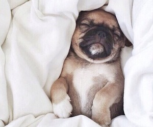 baby, dog, and mini image