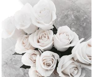 lovely, rose, and white image