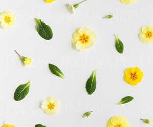 flowers, summer, and wallpaper image