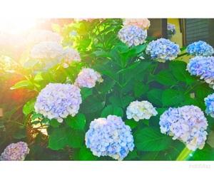 blue, flower, and sunshine image