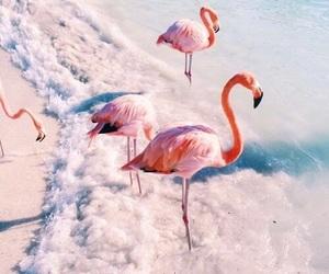 flamingo, pink, and beach image