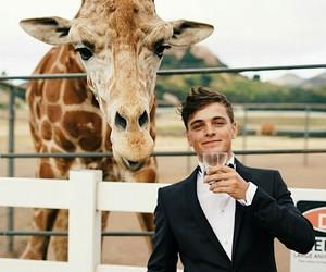 martin garrix, dj, and animal image