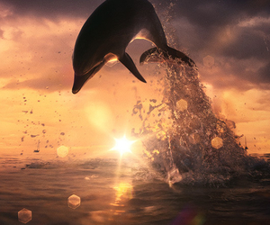 dolphin, sunset, and animal image