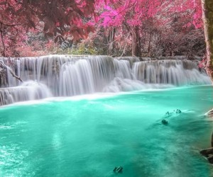 waterfall, nature, and flowers image