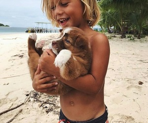 beach, tropical, and dog image