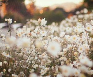 Image by Alex