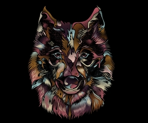 wolf and wild wolf image