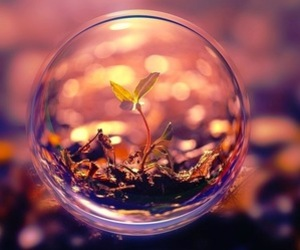 nature, plants, and bubbles image